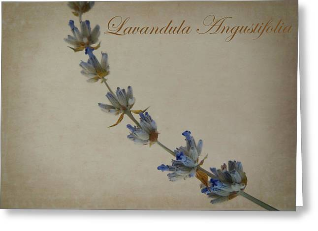 Lavandula Angustifolia Greeting Card