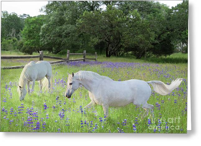 Lavender Pastures Greeting Card