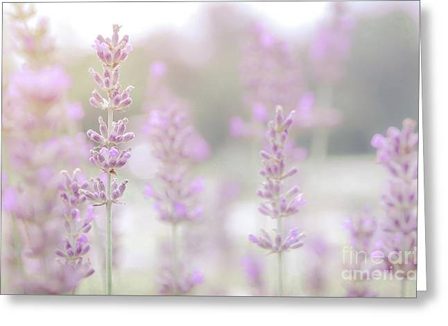 Greeting Card featuring the photograph Lavender 7  by Andrea Anderegg