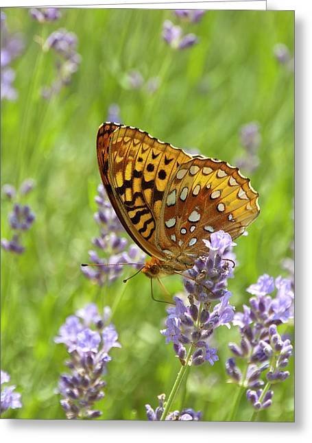 Lavender And Butterfly 2 Greeting Card