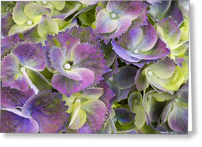 Lavender And Lime Greeting Card