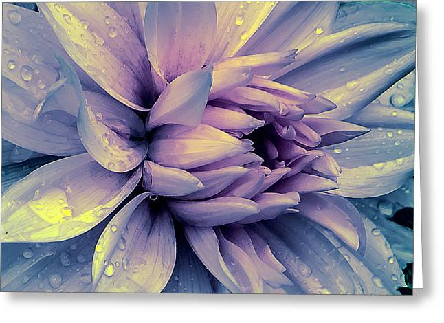 Greeting Card featuring the photograph Lavender And Pink Dahlia And Water Drops by Julie Palencia