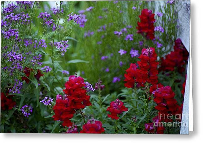 Lavender And Ruby Greeting Card