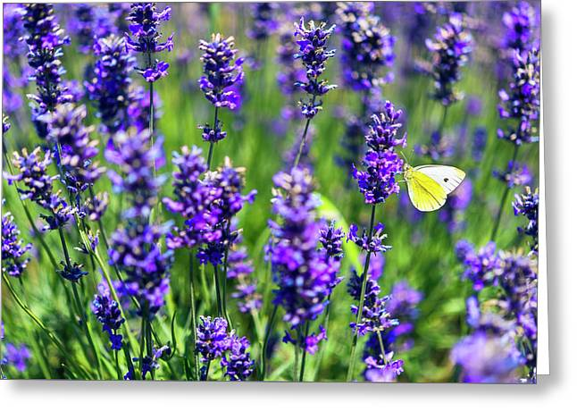 Lavender And The Heart Greeting Card by Ryan Manuel