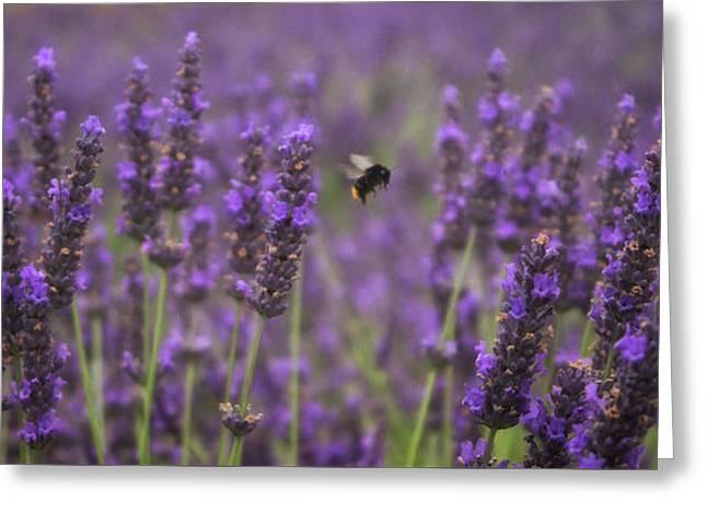 Lavender Bee Greeting Card