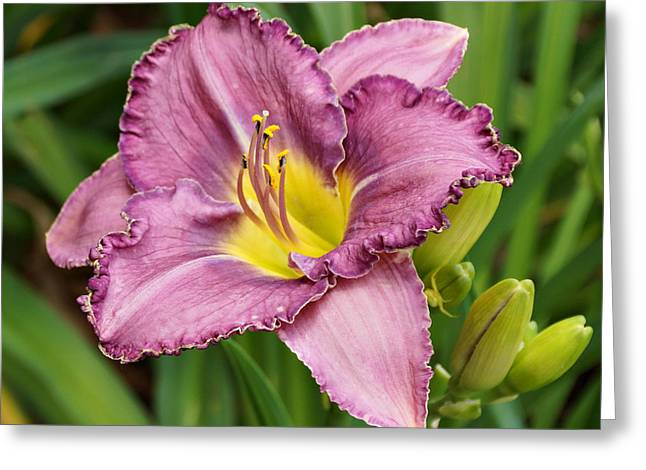 Lavender Daylily  Greeting Card by Sandy Keeton