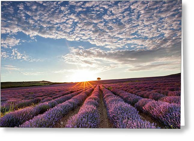 Lavender Greeting Card by Evgeni Dinev