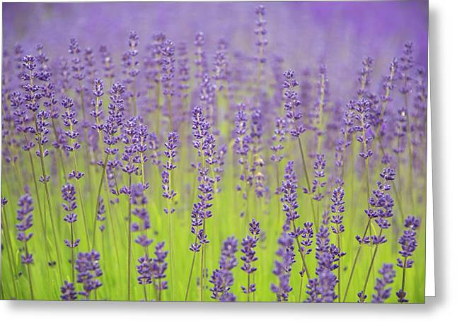 Lavender Fantasy Greeting Card