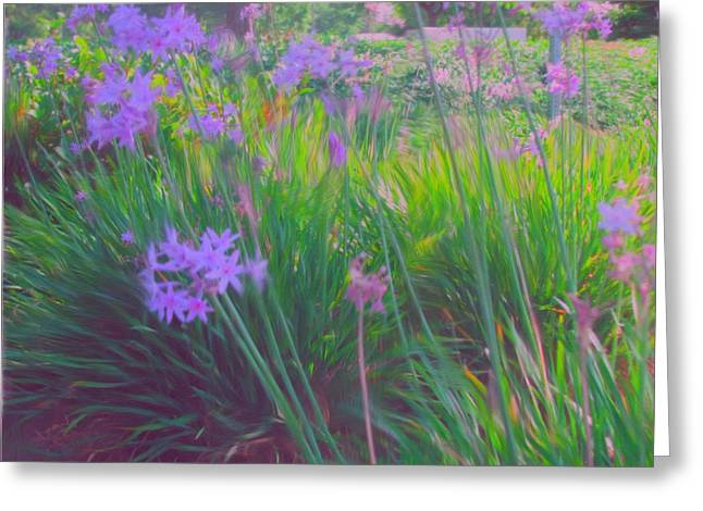 Lavender Field Greeting Card by Maribel McIntosh