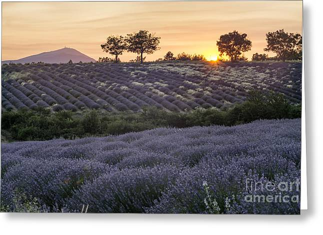 Greeting Card featuring the photograph Lavender Field Provence  by Juergen Held