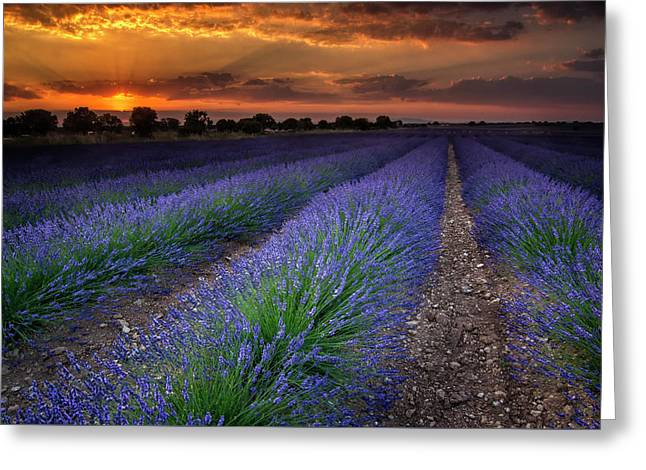 Lavender Fields Greeting Card by Hernan Bua