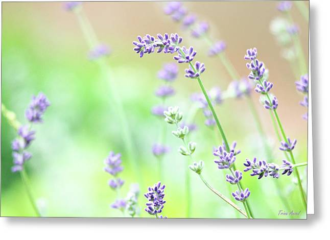 Greeting Card featuring the photograph Lavender Garden by Trina Ansel