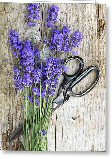 Lavender Harvest Greeting Card by Tim Gainey