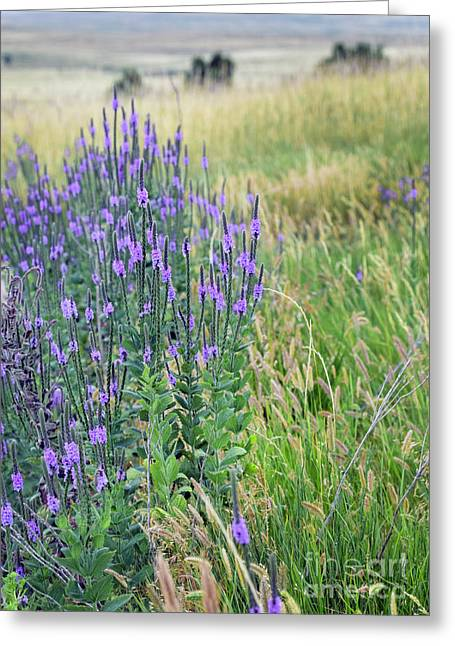 Verbena Hills Greeting Card