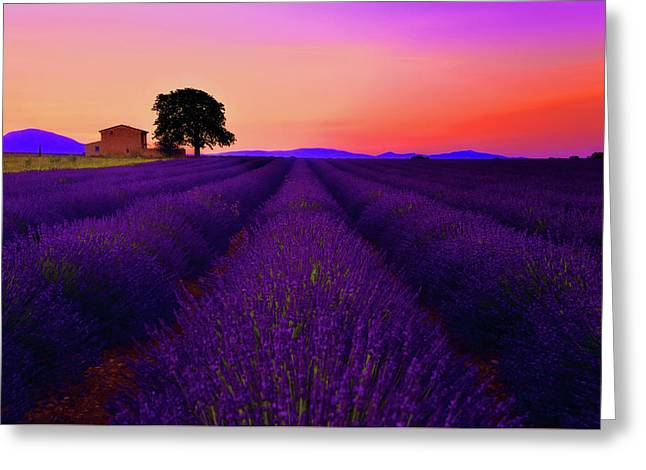 Lavender Home Greeting Card by Midori Chan