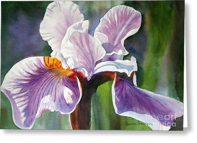 Lavender Iris With Colorful Background Greeting Card by Sharon Freeman