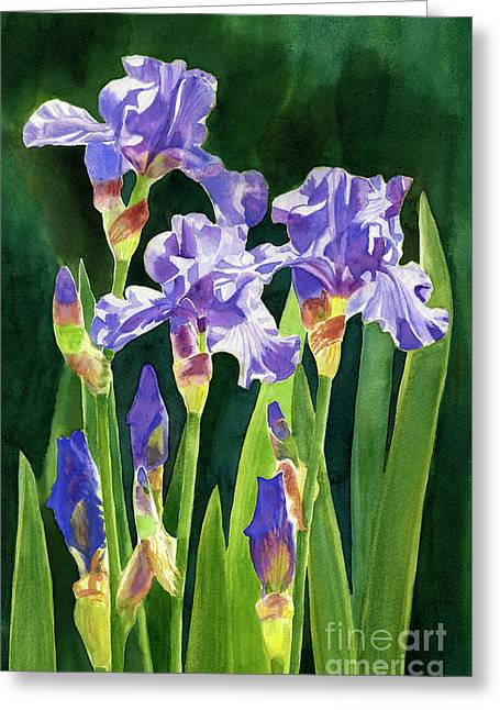 Lavender Irises And Buds With Background Greeting Card by Sharon Freeman