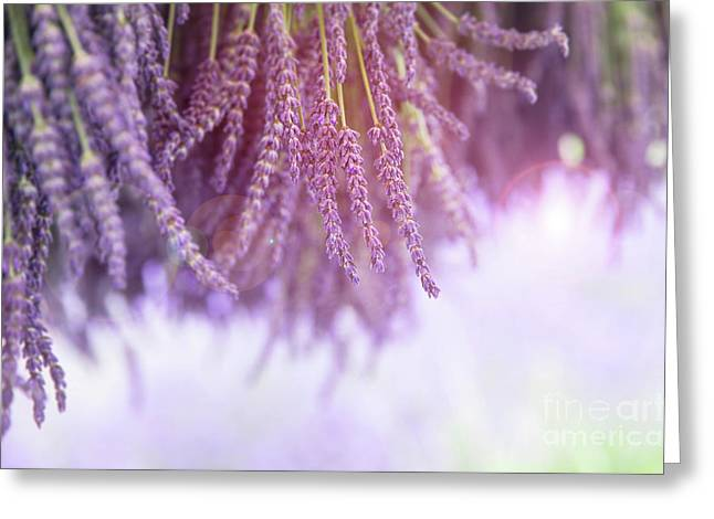 Lavender Greeting Card by Jane Rix