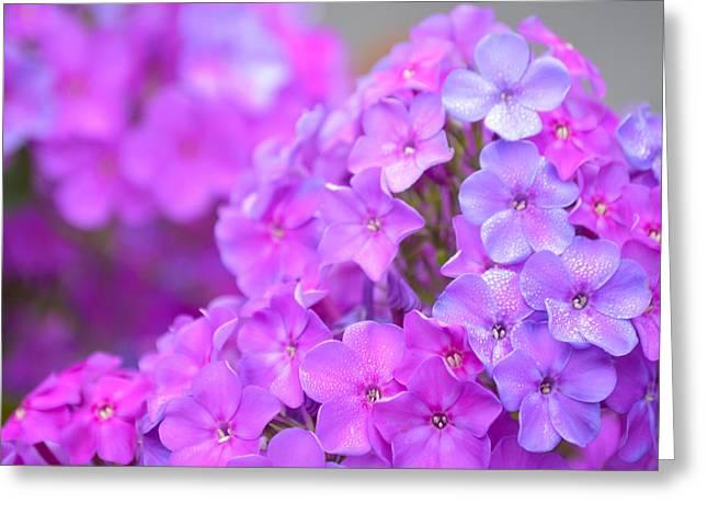 Lavender Greeting Card by Jimi Bush