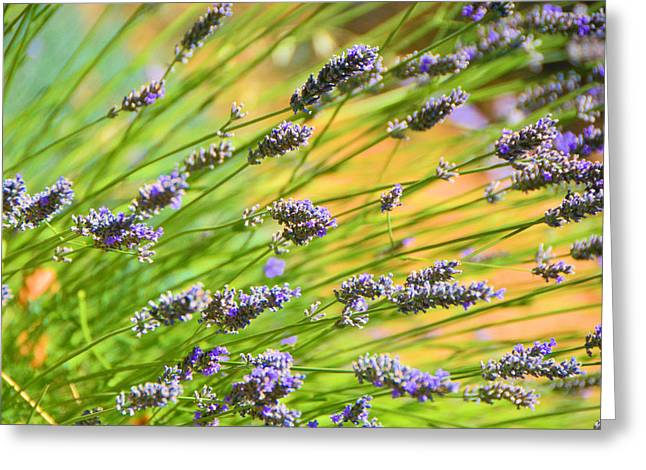 Lavender Greeting Card by Josephine Buschman