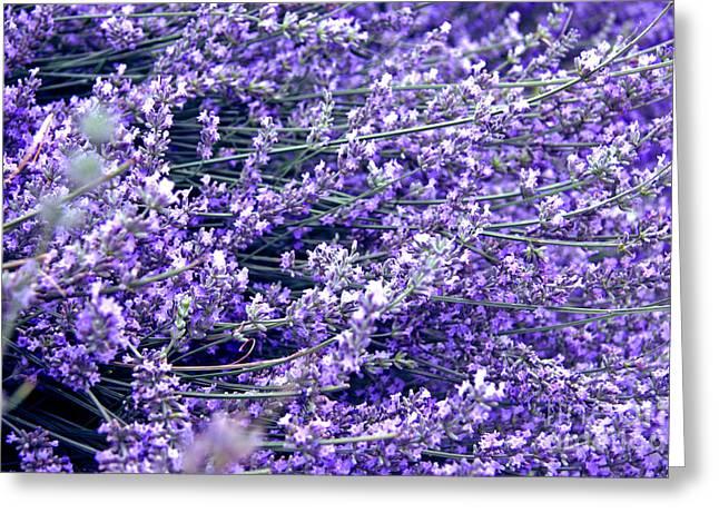 Lavender Greeting Card by Lali Kacharava