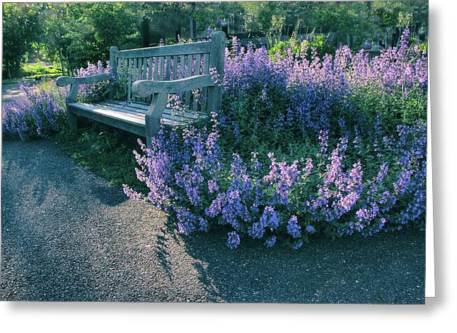 Lavender Light Greeting Card