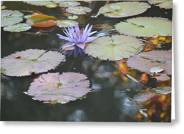 Lavender Lily And Autumn Reflection Greeting Card