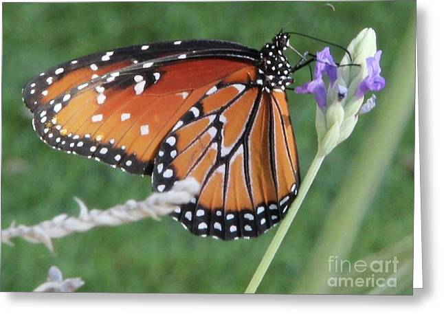 Lavender Lunch Greeting Card