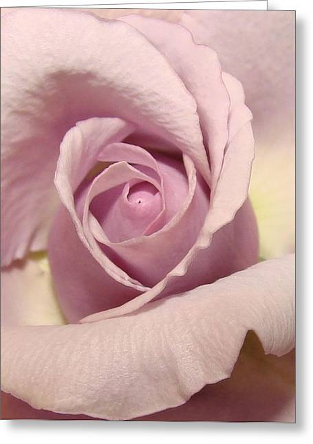 Lavender Mini Rose Greeting Card by Liz Vernand