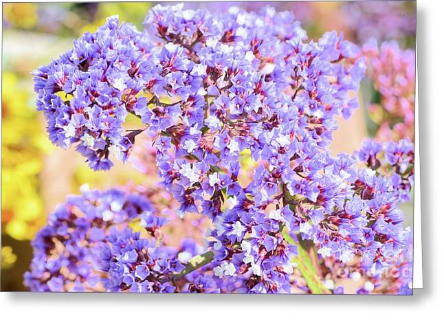 Lavender Mist Greeting Card by Luv Photography