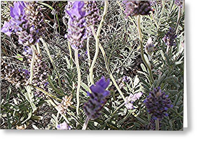 Lavender Moment Greeting Card by Winsome Gunning