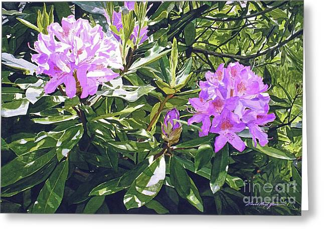Lavender Rhododendrons Greeting Card by David Lloyd Glover