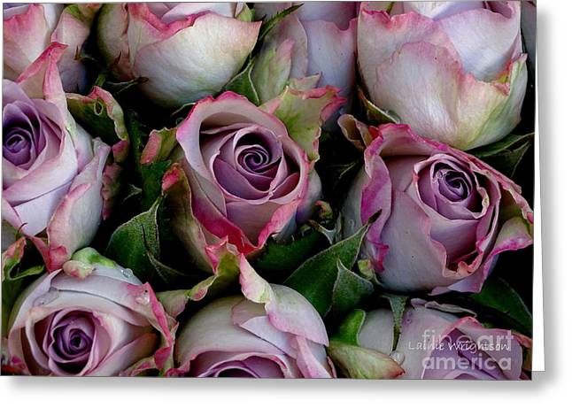 Lavender Roses Greeting Card by Lainie Wrightson