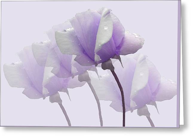 Lavender Roses  Greeting Card by Rosalie Scanlon