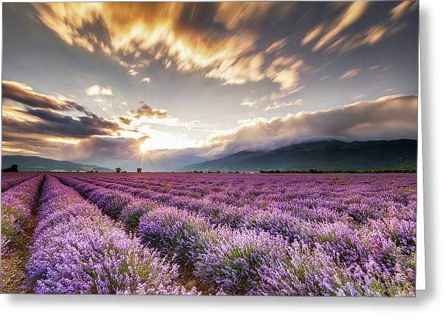 Lavender Sun Greeting Card by Evgeni Dinev