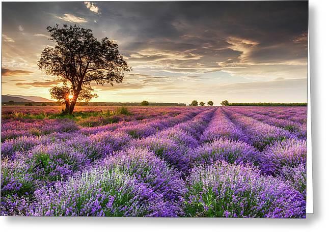 Lavender Sunrise Greeting Card by Evgeni Dinev