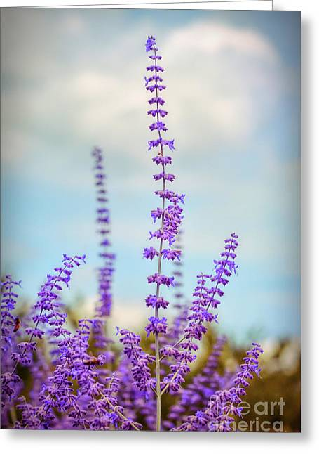 Greeting Card featuring the photograph Lavender To The Sky by Kerri Farley