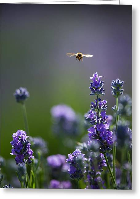 Lavender User Greeting Card