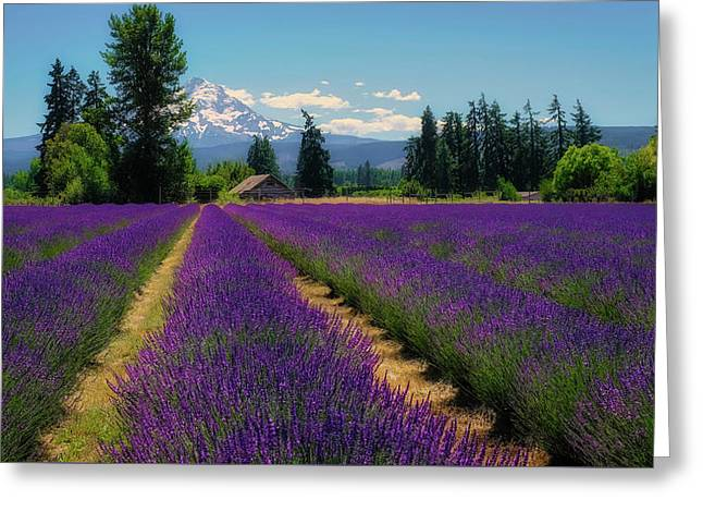 Lavender Valley Farm Greeting Card