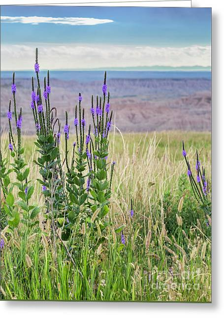 Lavender Verbena And Hills Greeting Card