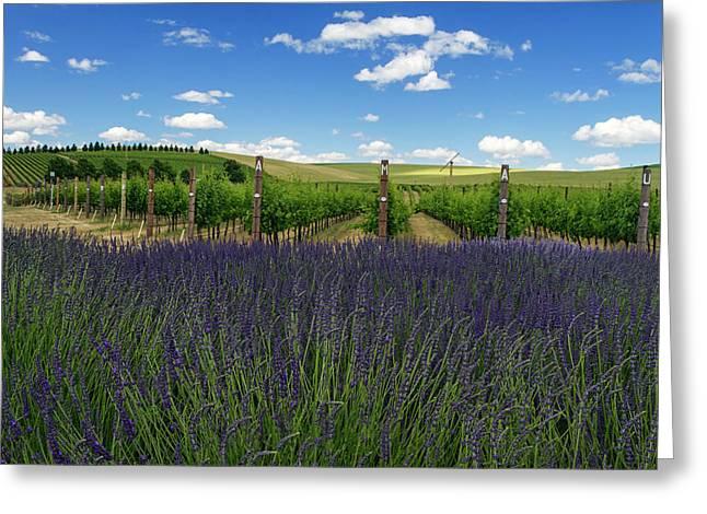 Lavender Vineyard Greeting Card by Mark Kiver