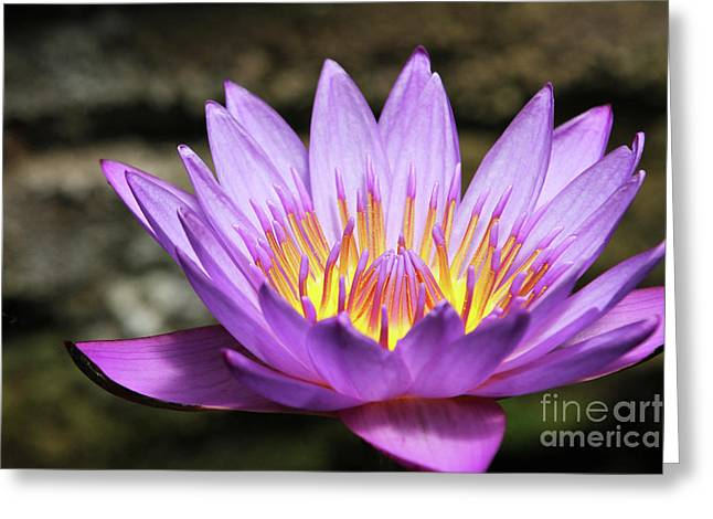 Lavender Water Lily #3 Greeting Card