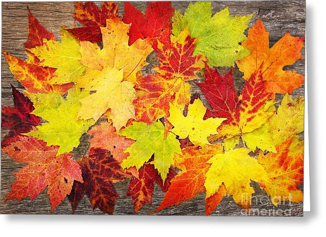 Layered In Leaves Greeting Card by Kathi Mirto