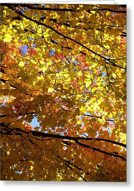 Greeting Card featuring the photograph Layers Of Autumn by Corinne Rhode