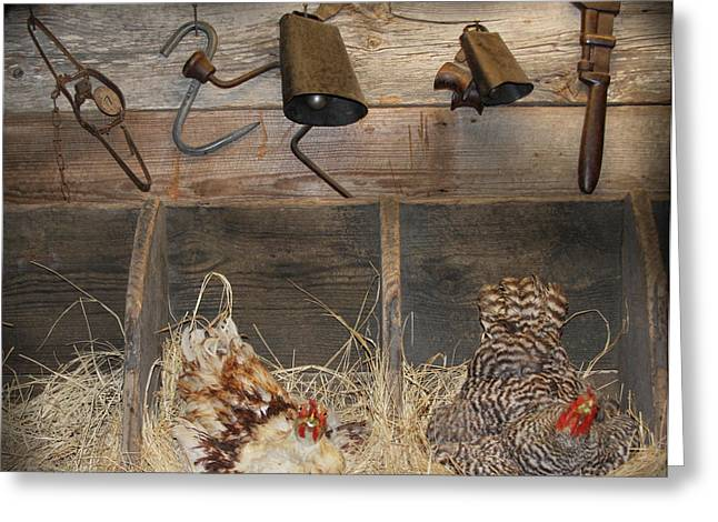 Laying Hens Greeting Card by Kim Henderson