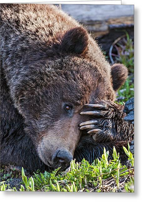 Lazy Bear Greeting Card