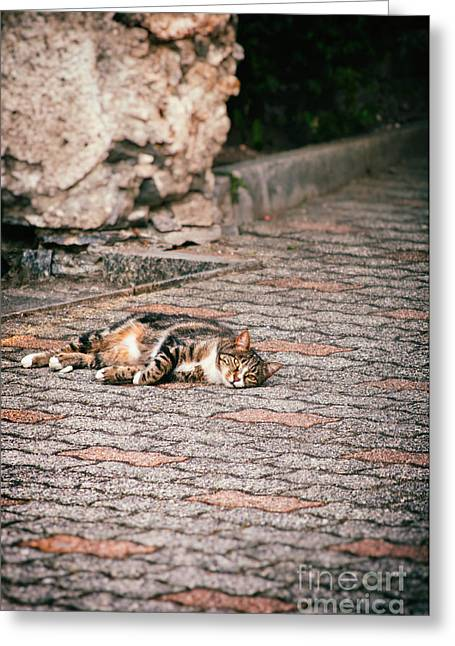 Greeting Card featuring the photograph Lazy Cat    by Silvia Ganora
