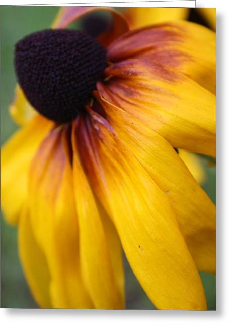 Lazy Daisy Greeting Card by Maria Young