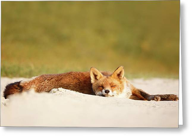 Lazy Fox Is Lazy II Greeting Card by Roeselien Raimond