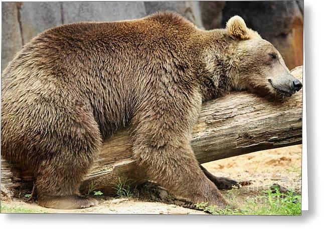 Lazy Old Bear Greeting Card